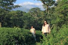 Tea Field // Dharamshala